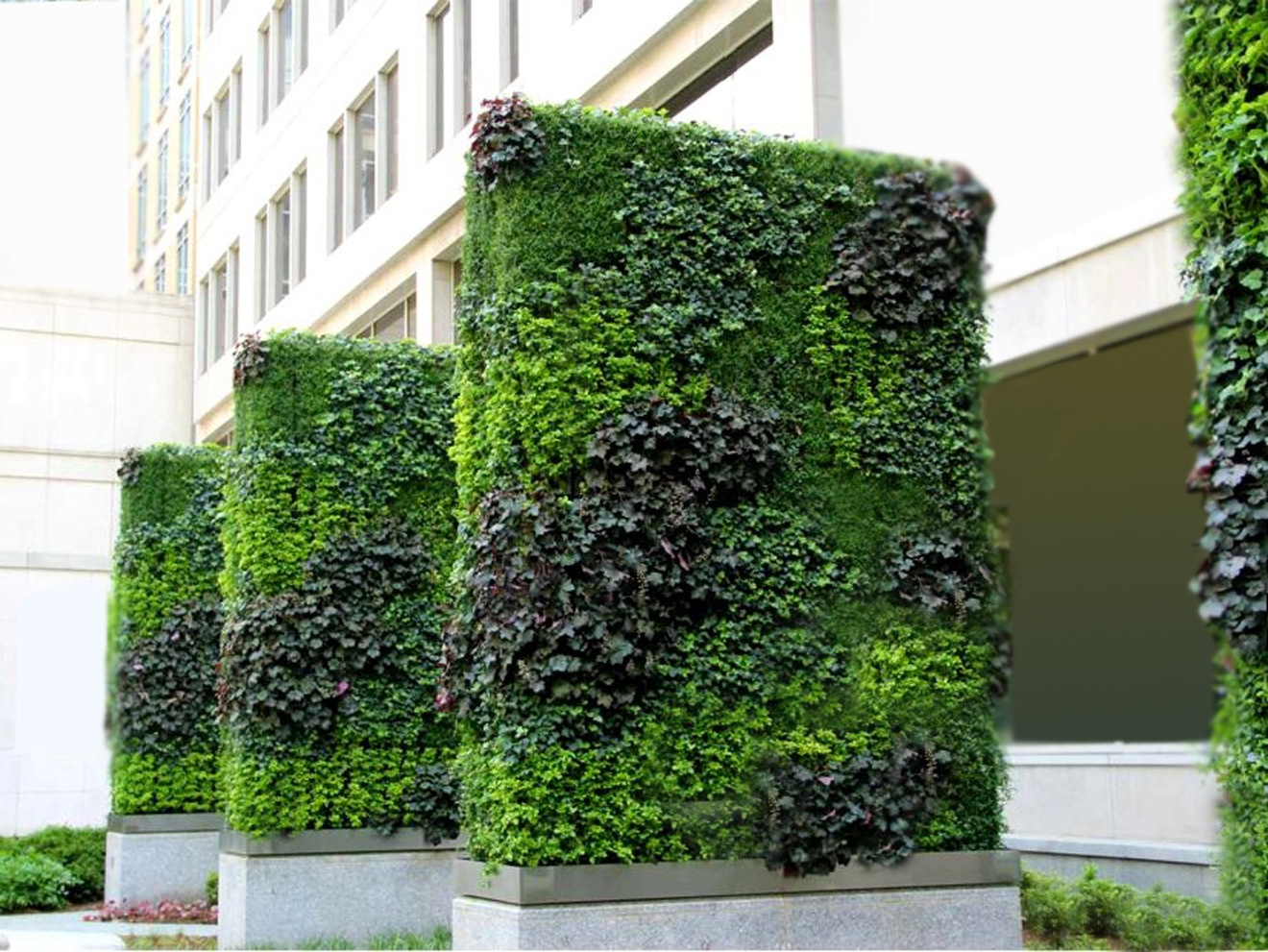 Outdoor Vertical Garden Services in India
