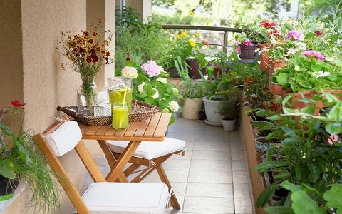 kitchen garden in balcony Vertical Garden Service Provider In India
