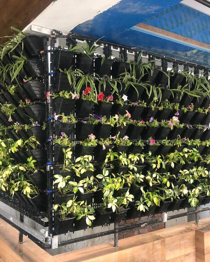 Vertical Garden Services in Lucknow