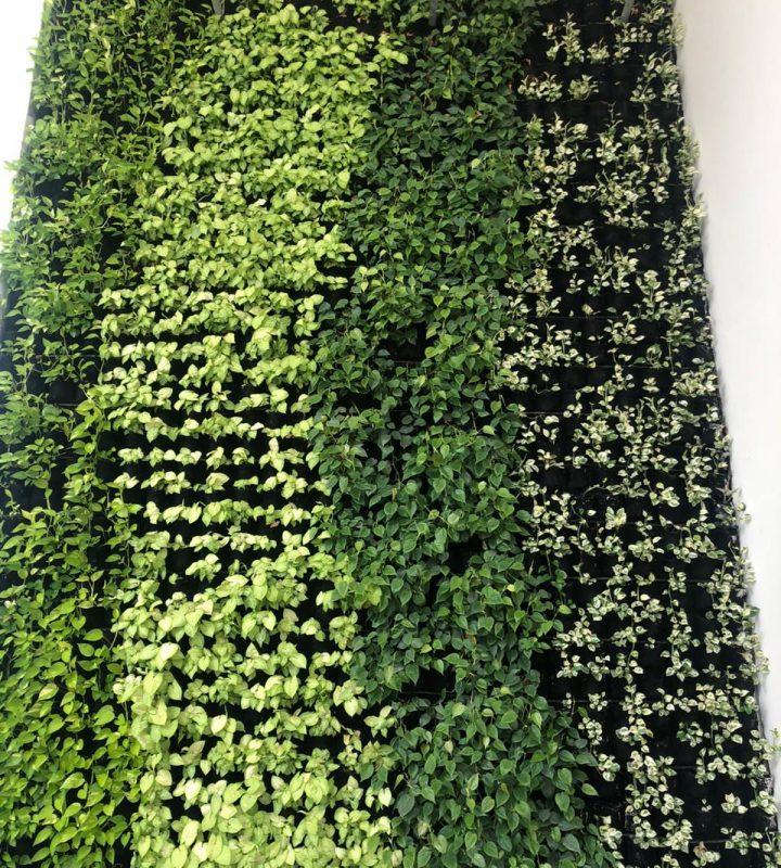 Vertical Garden Services in Delhi
