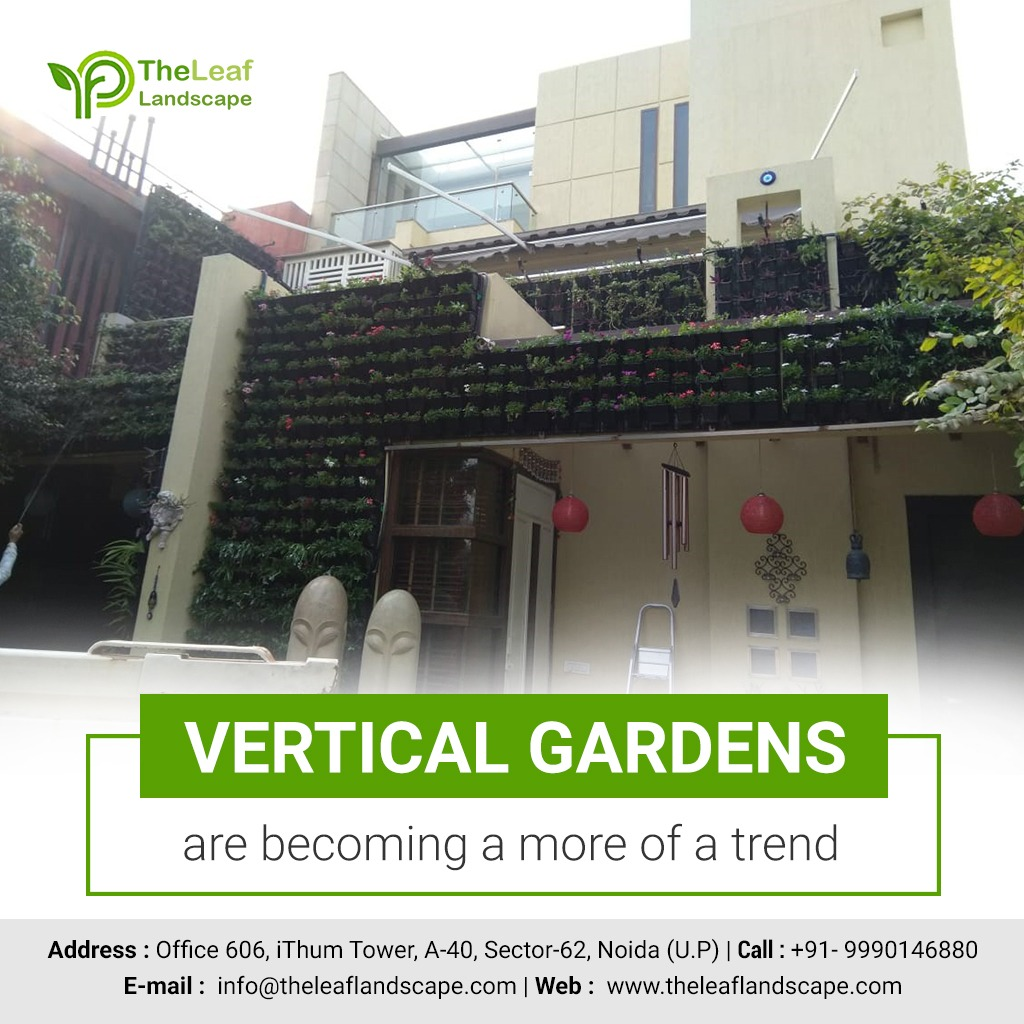 plants for vertical gardening