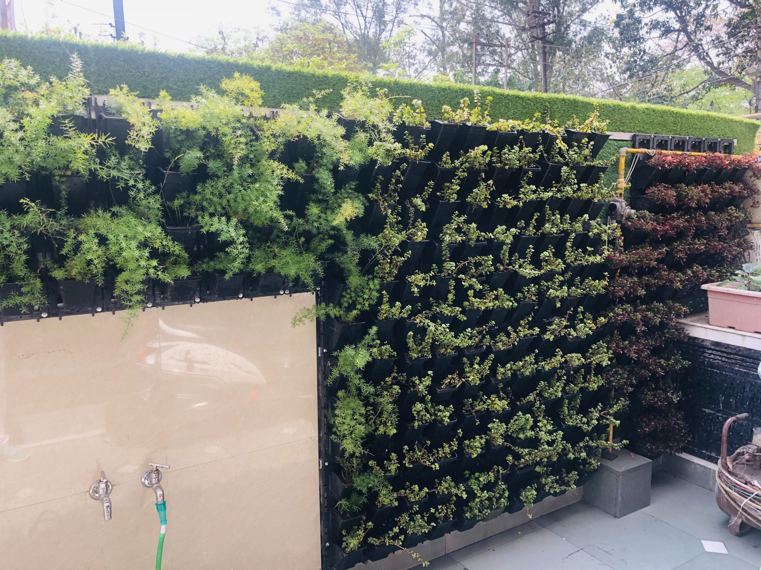 Reasons to Grow a Vertical Garden