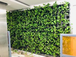 best vertical garden price